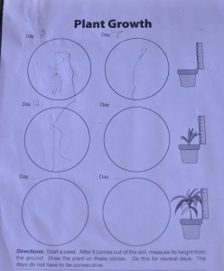 Plant growth chart